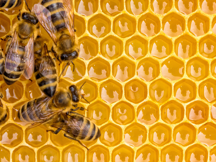 4 things you do not know about honey