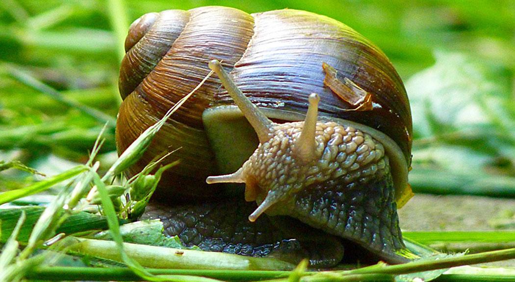 For snails