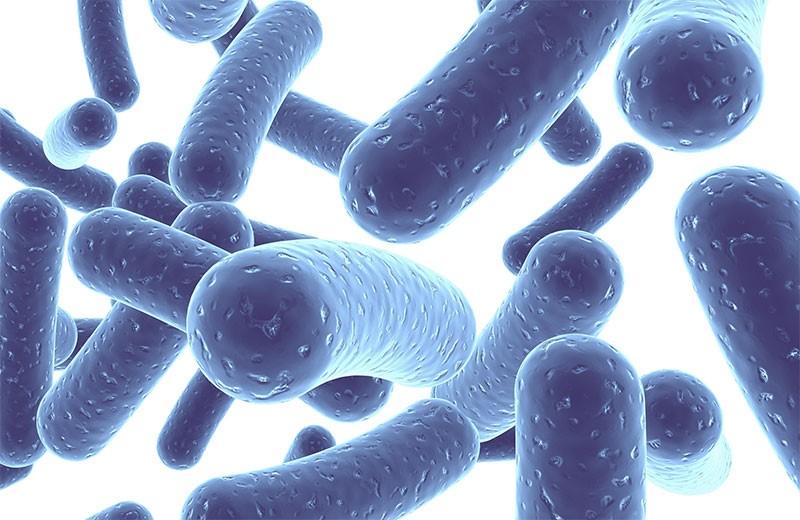 Каква е разликата между пробиотици, пребиотици и синбиотици и можем ли да си ги набавим по естествен начин чрез храната?
